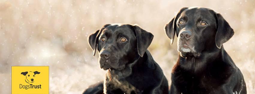 Dog Training Ballymena